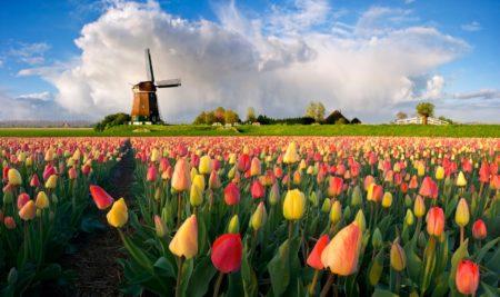 Как оформить голландскую визу самостоятельно и не получить отказ